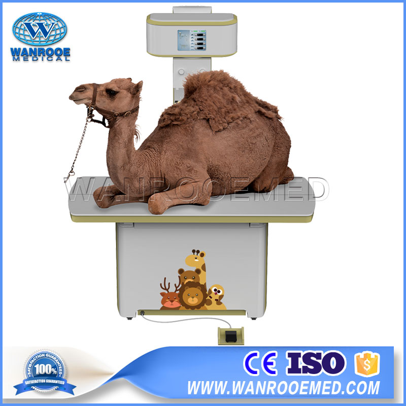 Veterinary X Ray Machine, Vet Digital Radiography System, Portable Veterinary X Ray Machine, Animal X Ray Machine, Digital Animal X Ray Machine
